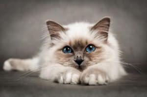 во сне убил кошку к чему это