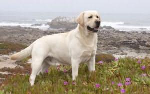 сонник белая собака нападает