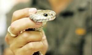 к чему снятся змеи мужчине сонник