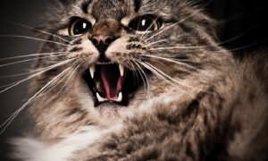 Укус кошки