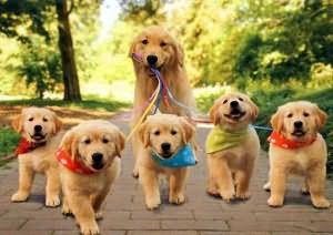к чему снятся щенки собаки