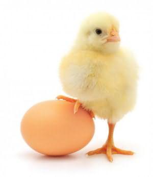 к чему снятся вылупившиеся цыплята