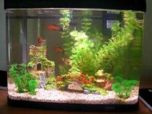 К снится чему в рыбы мужчине аквариуме