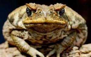 к чему снится жаба большая