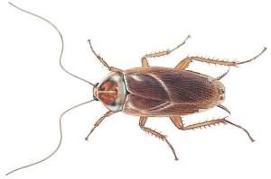 сонник тараканы много