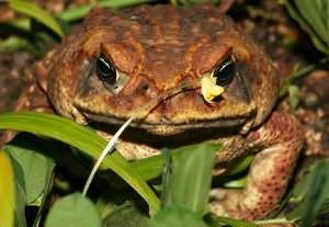 сонник к чему снится жаба