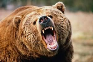 к чему снились медведи