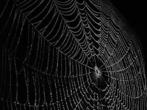 к чему снится убирать паутину