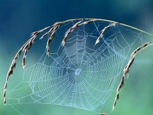 сонник к чему снится паутина