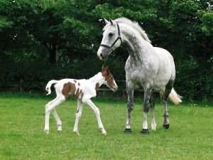 к чему снится серая лошадь