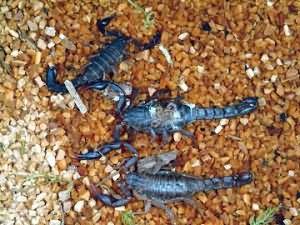 К чему снятся скорпионы