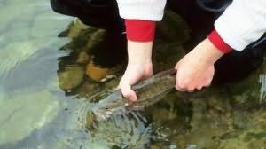 Снится ловить рыбу руками
