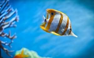 к чему снится девушке рыба