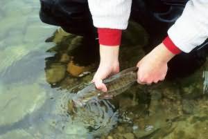 ловить рыбу руками во сне
