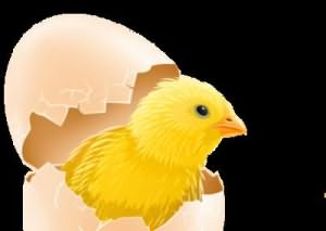 Сонник к чему снится разбить яйцо К чему снятся разбитые яйца