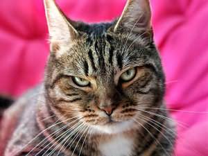к чему снится отрубленная голова кошки