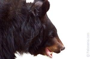 белый Медведь по соннику