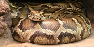 к чему снится большая змея