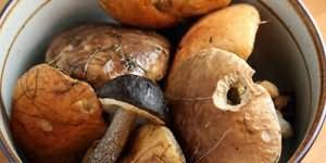 кушать червивые грибы