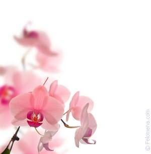 Цветы продавать по соннику
