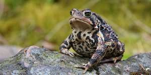к чему снится жаба