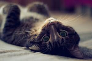 Сонник убить кота, к чему снится убить кота во сне