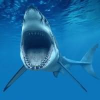 к чему снится акула девушке
