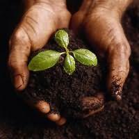 к чему снится копать землю