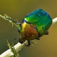 к чему снится майский жук