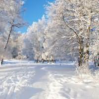 к чему снится белый чистый снег