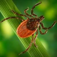 к чему снится укус насекомого