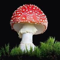 к чему снятся большие грибы