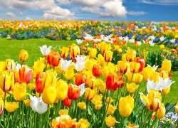 Сон-много цветов