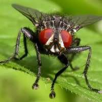 к чему снятся много мух