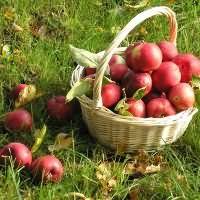 к чему снятся яблоки