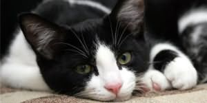 кормить кошек