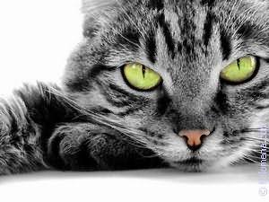 черный Кот по соннику