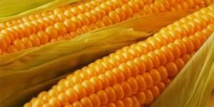 сонник кукуруза