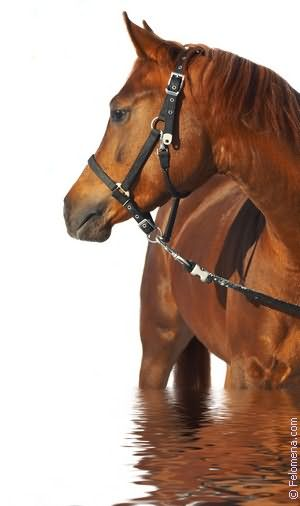 черная Лошадь по соннику
