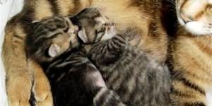 сонник маленькие котята