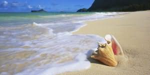 ракушка на море