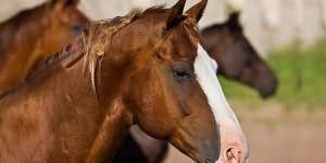 к чему снится отрезанная голова лошади