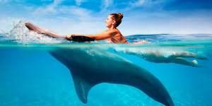 Секс девушки в воде с дельфинами