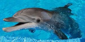 Занятие сексом с дельфином смотреть