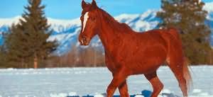 рыжий конь во сне