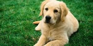 сонник собака