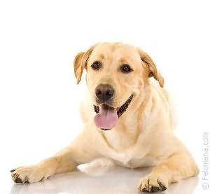 завести Собаку по соннику