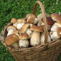 собирать во сне белые грибы