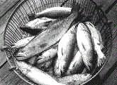 Сонник Поймать рыбу, к чему снится поймать рыбу во сне