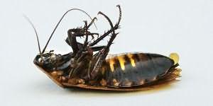 Тараканы по соннику Нострадамуса